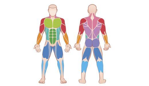 体幹トレーニング徹底解説。体幹ってどこ?鍛えるメリットは?鍛え方もレクチャー