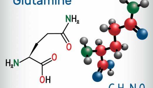 グルタミンの効果とは。摂取量や摂取タイミングなど、筋トレ民なら知っておきたい栄養素を解説[管理栄養士監修]