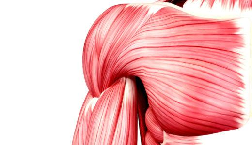 自宅でできる「筋膜リリース」の効果的なやり方【完全版】