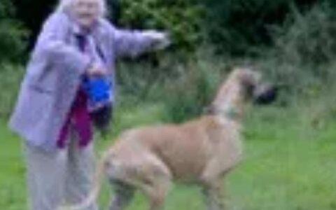 【速報】最強の犬が発見される