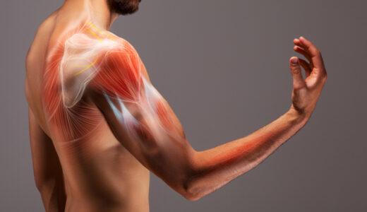 バレエダンサーから学ぶ、二の腕を細くする簡単筋トレ