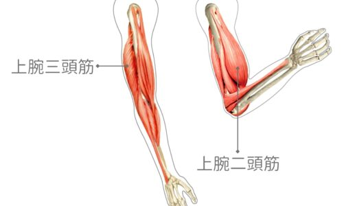 二の腕を太くするダンベル筋トレメニュー│上腕二頭筋・上腕三頭筋の効果的な鍛え方